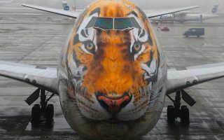 Что такое «Тигролет» (авиакомпания Россия) и зачем ему такая раскраска